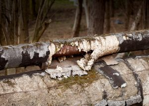 pipe-decay